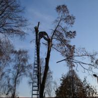 rizikove-kaceni-stromu